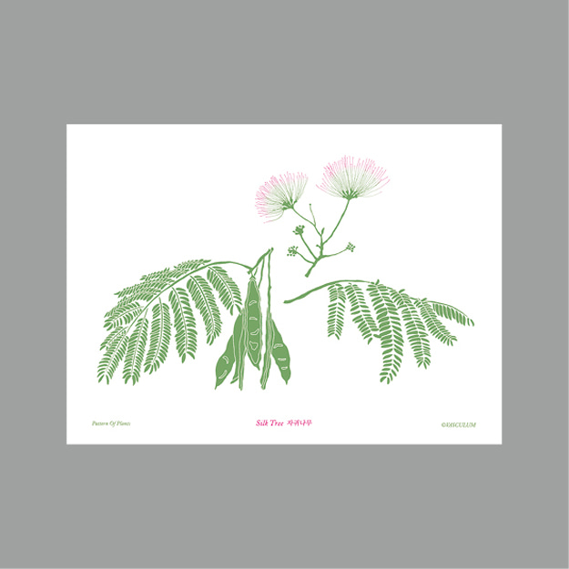 자귀나무 Plants Post Card